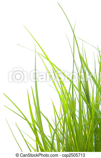 Grass - csp2505713