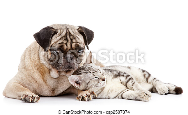cat take a nap while pug looking after