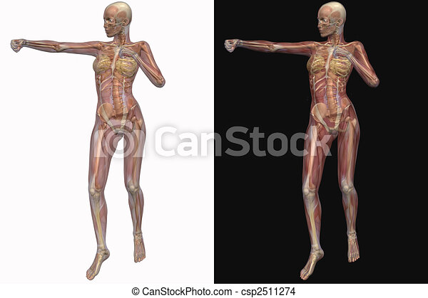 Female skeleton with transparent muscles - csp2511274
