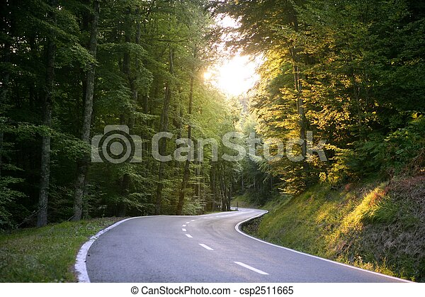 Asphalt winding curve road in a beech forest - csp2511665