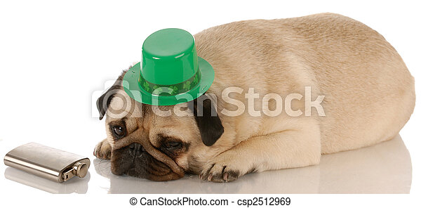 pug dressed up for St. Patricks Day on white background - csp2512969