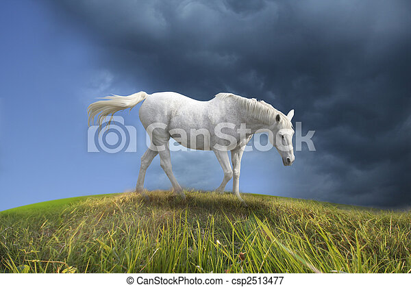 White horse walking in prairie. - csp2513477