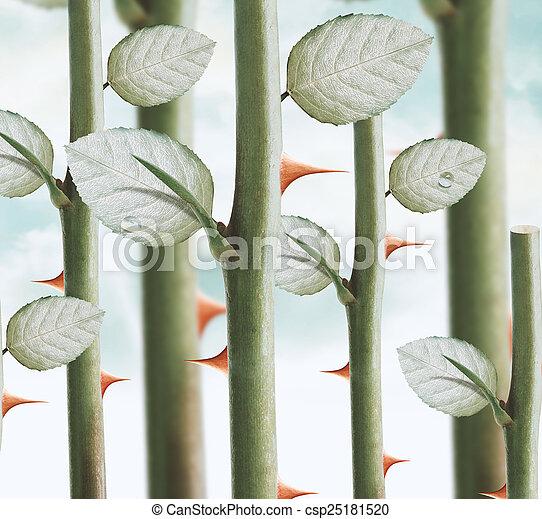 rose thorns - csp25181520