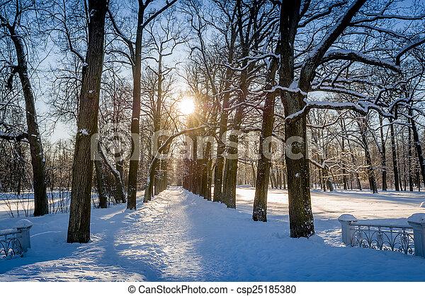 Winter sun in park