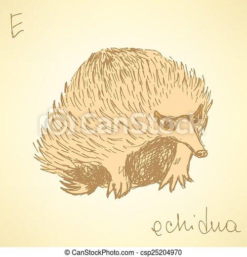 Cute Echidna Drawing Sketch Cute Echidna in Vintage