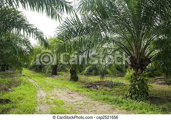 Palm Oil Plantation. - csp2521656