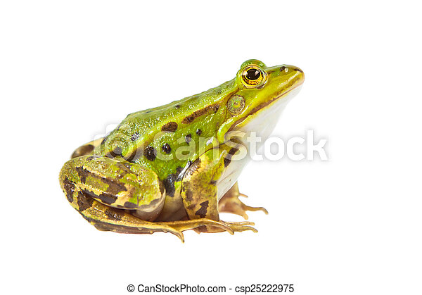 Pool frog male - csp25222975