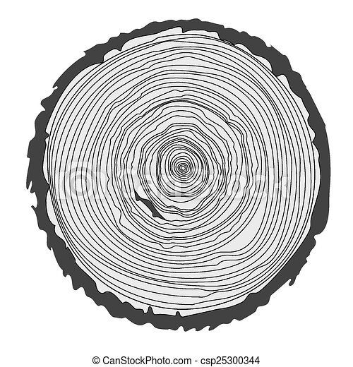 Tree Ring Drawings Tree Rings And Saw Cut Tree