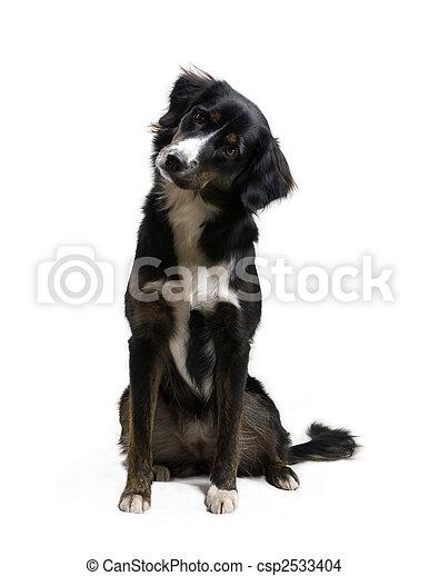 -, hund, zuhören - csp2533404