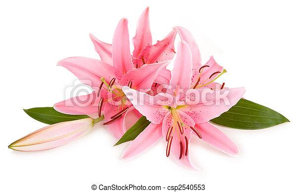 Floral Arrangement - csp2540553