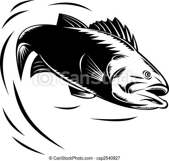 Sea Bass jumping - csp2540927