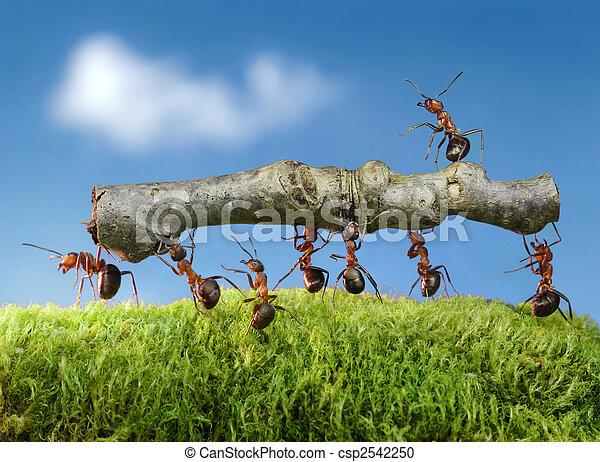 ants carry log - csp2542250