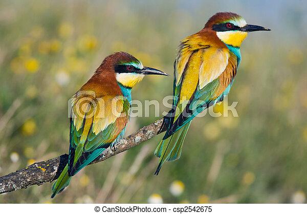 Couple of birds