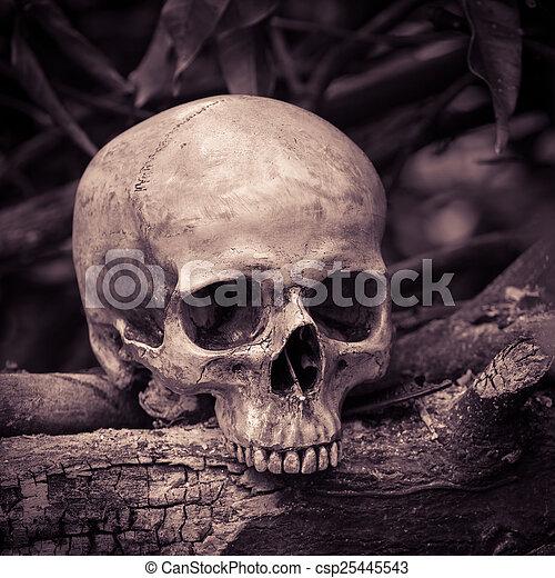 Skull on ashes