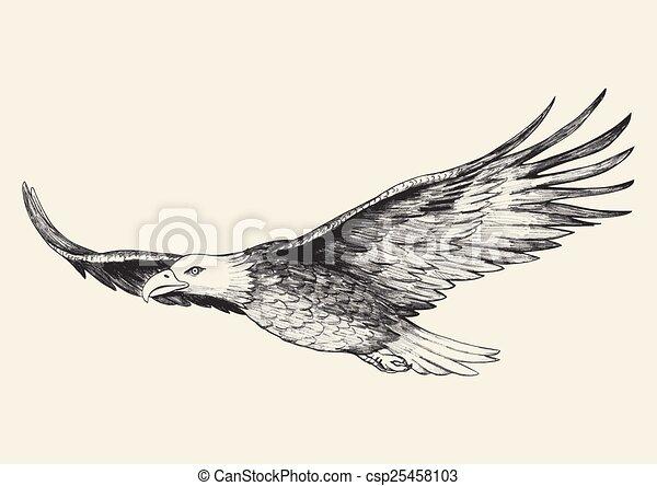 Vector Clipart of Soaring Eagle - Sketch illustration of a soaring ...