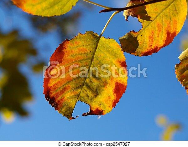 feuilles, aulne - csp2547027