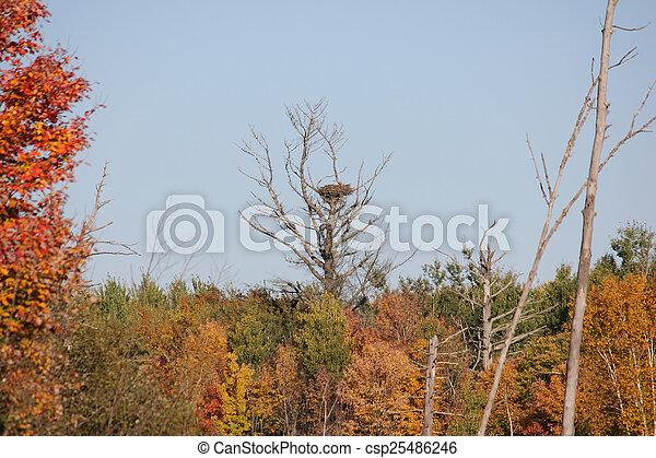 búvóhely, madarak - csp25486246