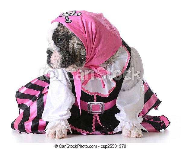 puppy pirate - csp25501370