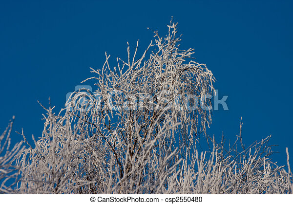 tree in winter - csp2550480
