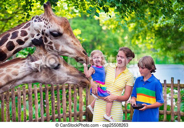 Giraffe, Fütterung, familie,  zoo - csp25508263
