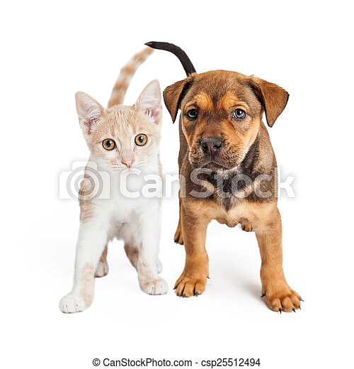Puppy and Kitten Standing Together