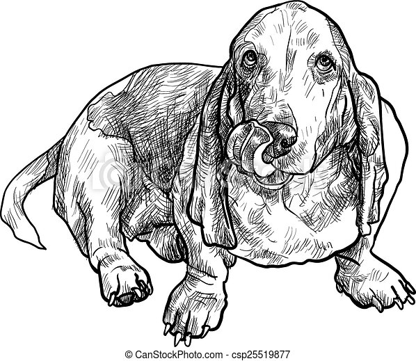 Vectors Illustration of basset hound dog sitting and stick out ...
