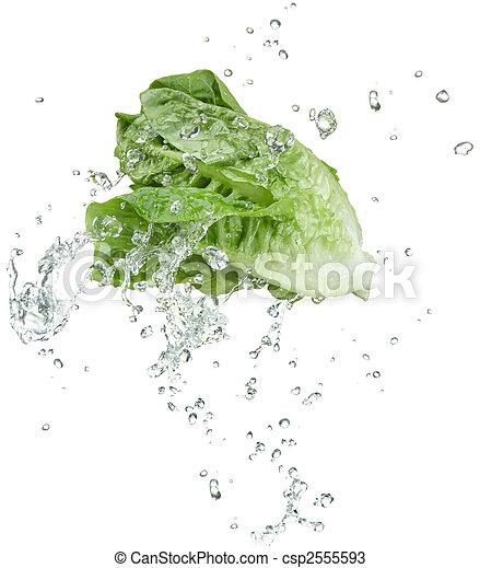 vegetal, fresco - csp2555593