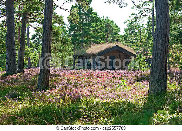 Wooden cabin on a wildflower meadow - csp2557703