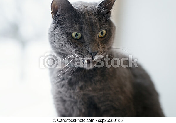 gray cat surprised face