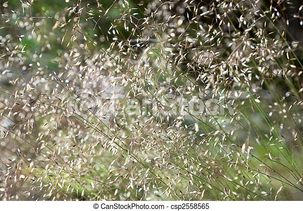 Green summer grass blurred abstract background - csp2558565