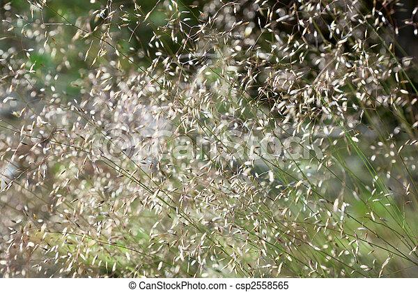 Green summer grass blurred abstract background - csp2558565