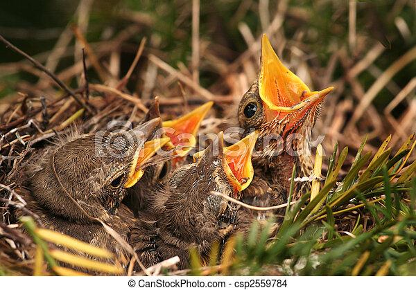 Photo de nid moineau moineau dans les nid csp2559784 recherchez des images des - Comment effrayer les moineaux ...