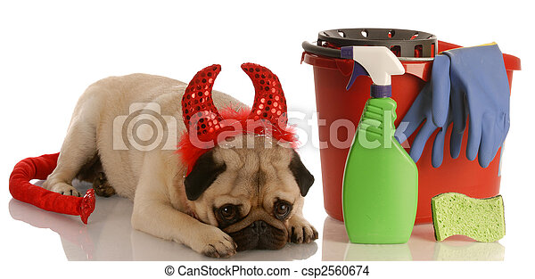 bad dog - pug dressed as devil laying beside cleaning supplies - csp2560674