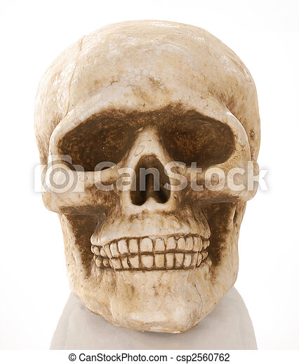 skull skeleton with reflection isolated on white background - csp2560762