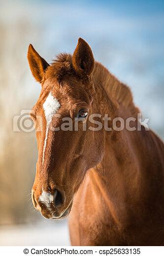Fox-colored dream horse
