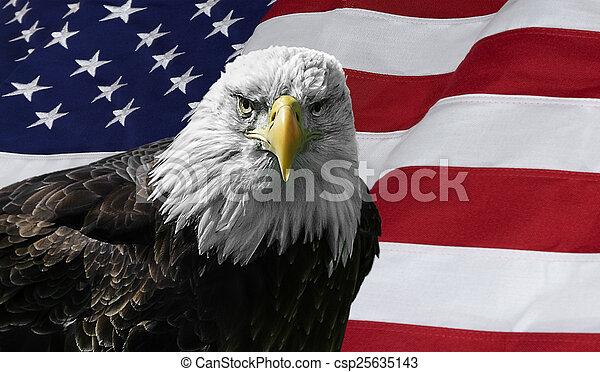 鷹, 美國人, 禿頭, 旗 - csp25635143