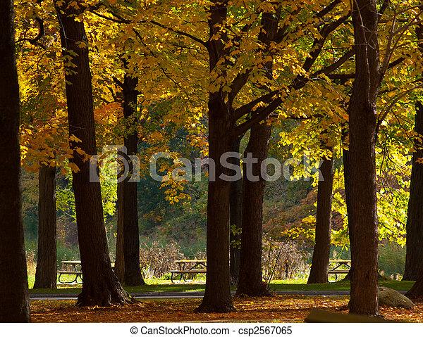 Autumn Backdrop - csp2567065