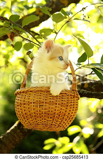 White small fluffy kitten in the basket