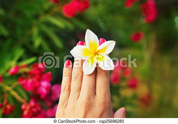 A young female wonam hand with beautiful blossom of Frangipani flower between fingers. Red nail polish manicure. Blurred background with flowers.