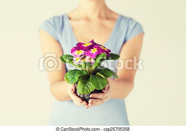 女性, 土壌, 花, 手を持つ - csp25705358