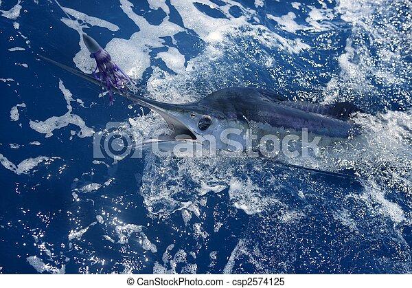 Atlantic white marlin big game sportfishing - csp2574125