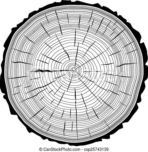 Tree Ring Drawings Tree Rings Saw Cut Tree Trunk