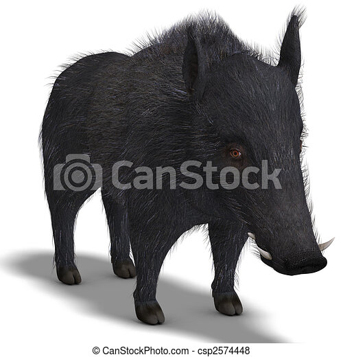 dangerous black boar is stiff-bristled - csp2574448