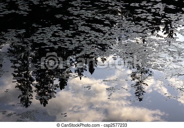 Cedar Reflection in Algonquin Pond - csp2577233