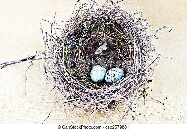 lascar, pardal, ninho, ovos - csp2579881