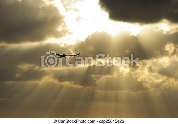 Sun ray heaven - csp25845426