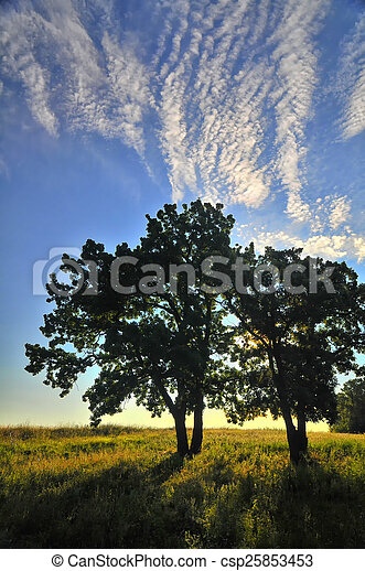 Landscape with sun through the trees