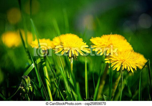 spring flowers background - csp25859070