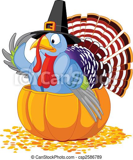 Pilgrim Turkey in pumpkin - csp2586789