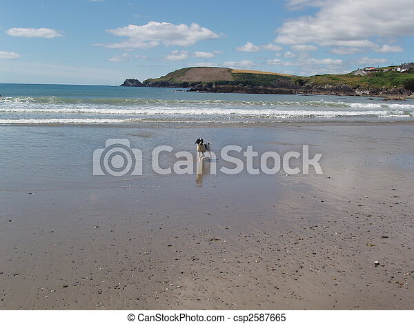 Dog Beach - csp2587665